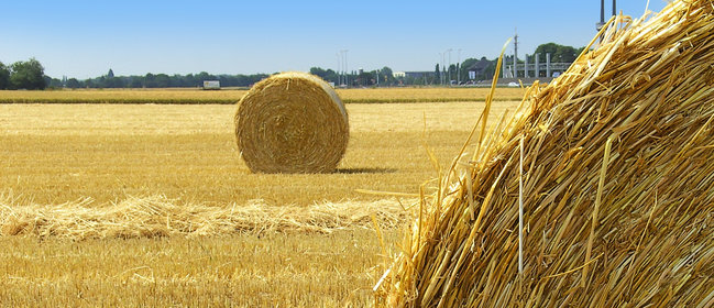 Domestic bioenergy production in the UK poses no threat to food production